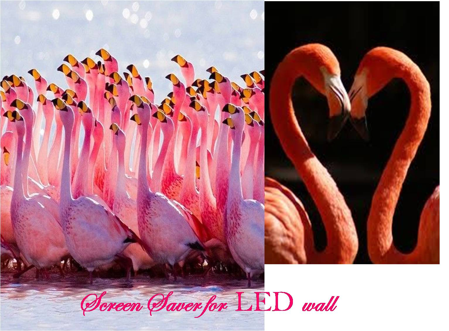 FLAMINGO LED WALL